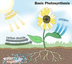 how do the atmosphere and biosphere interact example