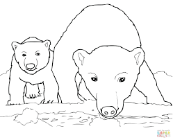 articles polar bear coloring pictures free tag polar bear