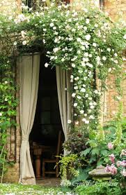 211 best climbing roses images on pinterest climbing roses