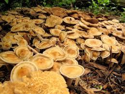 it u0027s not work it u0027s gardening mushrooms part 1