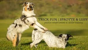 australian shepherd yellow trick fun with sprotte u0026 lissy youtube