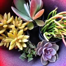 home depot austin tx black friday the home depot 18 photos u0026 25 reviews nurseries u0026 gardening