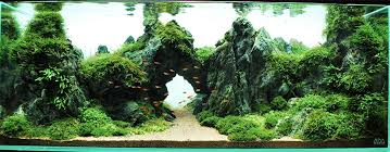 Plants For Aquascaping 5 Of The Most Used Aquarium Plants U2022 Aquascaping Love