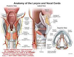 Strauss Heart Drops Thyroid Drops Under Tongue Incrementstrust Ga