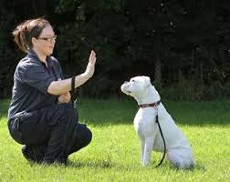 boxer dog york deaf dog taught sign language at blue cross centre near thirsk