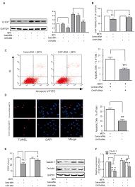 frontiers endoplasmic reticulum stress mediates methamphetamine