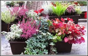 winterharte pflanzen balkon sichtschutz balkon house und dekor - Winterharte Pflanzen Balkon