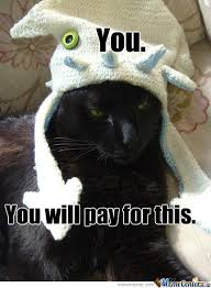Funny Angry Memes - angry cat memes best collection of funny angry cat pictures