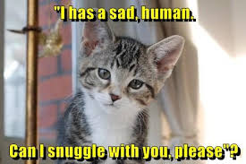 Sad Cat Memes - lolcats sad lol at funny cat memes funny cat pictures with
