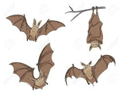 cartoon bat images u0026 stock pictures royalty free cartoon bat