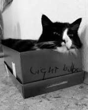 Gato com crise existencial faz sucesso na internet - BBC Brasil ...