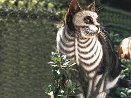 Halloween Costume Cats Pet Matchmaker Cats Costumes Ready Halloween