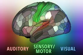 Brain Mapping Map Provides Detailed Picture Of How The Brain Is Organized