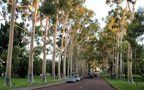 Kings Park Botanic Garden by 10 Free Things To Do In Perth U2013 Big Travel Nut