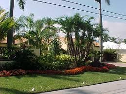Tropical Landscape Ideas by 11 Best Tampa Landscape Design Tropical Oasis Images On Pinterest