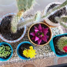 make a bohemian chic terrarium for colorful plants garden club