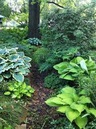 tree or shrub archives page lovely woodland garden with hostas backyard pinterest