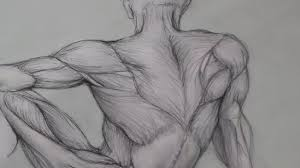 Anatomy Of Human Body Sketches Figure Drawing Lessons 6 8 Anatomy Drawing For Artists Drawing