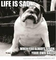 Sad Dog Meme - funny for funny sad dog meme www funnyton com