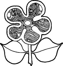 aboriginal flower coloring page wecoloringpage