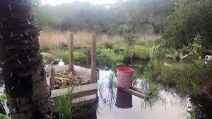 texas native plants landscaping texas treehugger