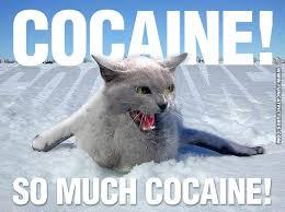 Grumpy Cat Snow Meme - cocaine cat meme 28 images cocaine cat meme 28 images funny