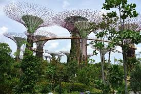 exterior awesome trees picture of gardens by the bay