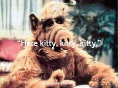 Alf Meme - alf quotes enchanting 49 best alf meme creator images on pinterest
