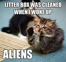 Clean Cat Memes - clean cat urine fast cat urine problems eliminated