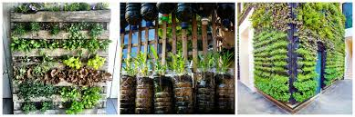 19 plants for apartments ever wonder why is weho s sunset