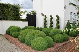 English Box Topiary - topiary cloud hedging u2014 crown topiary