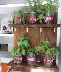 herbs indoors grow an indoor garden with fresh herbs garden club
