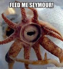 Feed Me Seymour Meme - th id oip 3gifd91qr5 bhwghijbrnahail