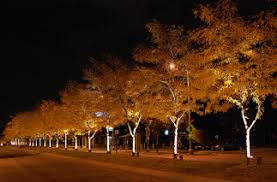 Outdoor Up Lighting For Trees Scott Entertainment Wedding Djs Lighting And Sound