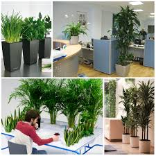 Plants For Office Plants Suitable For Office