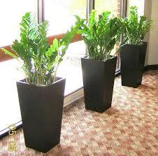 indoor plants india indoor plants flora landscape service provider in khatiwala tank