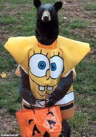 Scary Halloween Animals by Halloween Animals Pictures Freaking News