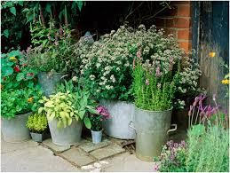 backyards chic garden design with herbs in containers
