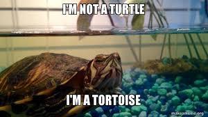 Tortoise Meme - i m not a turtle i m a tortoise make a meme