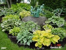 best 25 hosta gardens ideas on pinterest hosta plants shade