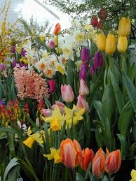 bulb garden if you are looking for a bargain then look no further
