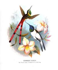 beautiful birds from the nineteenth century bailey