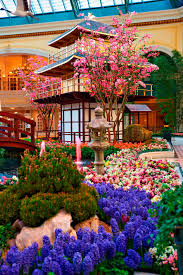 Botanical Gardens Bellagio by Bellagio Celebrates Japanese Culture With Vibrant Spring