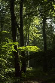 tree cover and shade tolerance shape plant species distributions