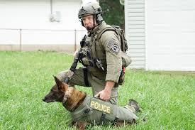 belgian malinois vest k9 officer