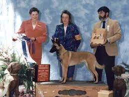 belgian shepherd national specialty dog pictures