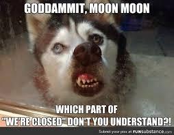 Moon Moon Meme - goddammit moon moon funsubstance