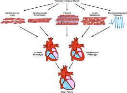 pathological ventricular remodeling circulation