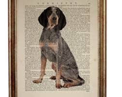 bluetick coonhound in tennessee bluetick etsy