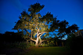 outdoor lighting to accent your beautiful landscape